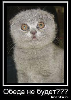 Игра Где же кот в Одноклассниках - ответы