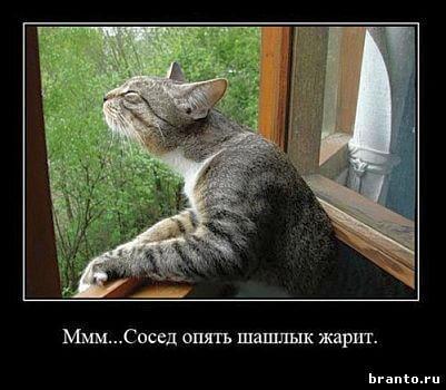 Игра Где кот в Одноклассниках - ответы