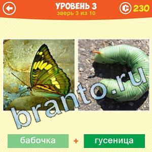 1 Фото: Что за зверь? - ответы на игру (android)