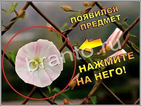 Игра Что изменилось в Одноклассниках - ответы