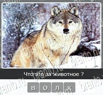 Игры разума ВКонтакте - ответы к игре