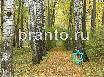 Найди собаку - ответы на игру ВКонтакте, в Одноклассниках