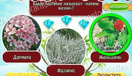 Отгадайка: ответы на игру в Одноклассниках