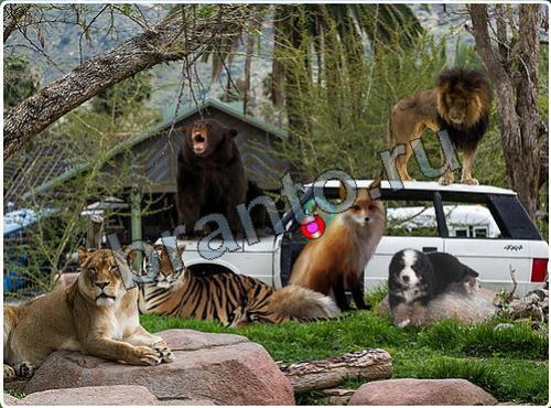 Игра Побег из зоопарка - ответы: найти ОБЕЗЬЯНУ и БЕЛКУ
