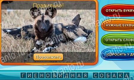 Собаки и кошки: ответы на игру в Одноклассниках